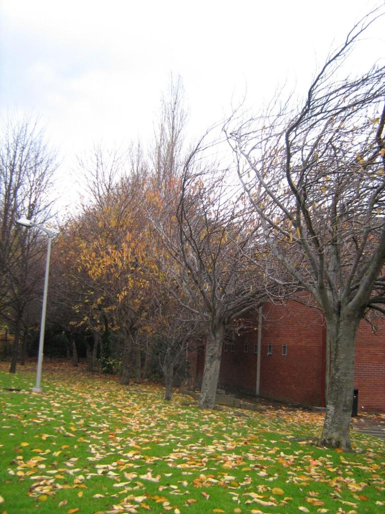 Autumn on UCD Smurfit School campus